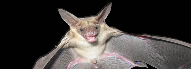 A Bat Bite?