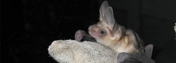 A Sick Bat?