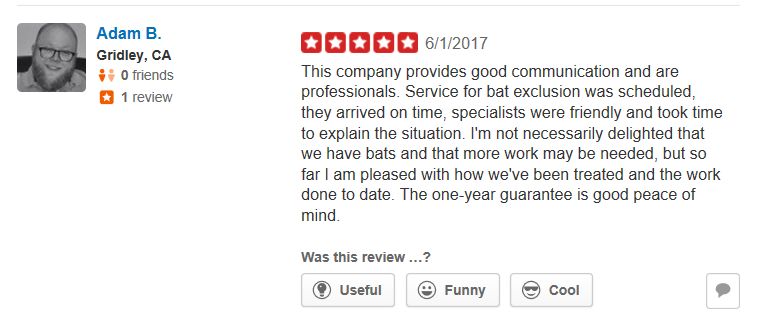 Yelp Review Adam